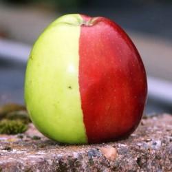 Минусы яблочной диеты