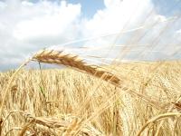 Зерновая диета