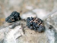Польза мумие, его вред