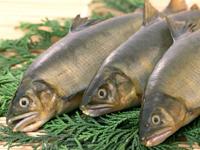 Польза рыбы, её вред
