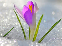 Диета Весна