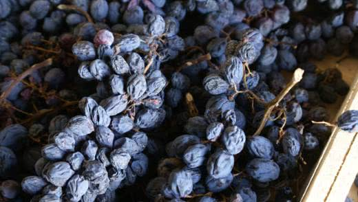 Как сушить виноград для получения изюма