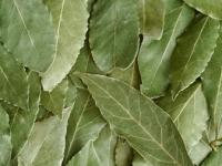 Очищение организма лавровым листом