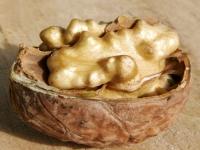 Грецкий орех — польза и вред