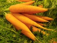 Полезные свойства моркови, её вред