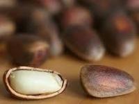 Кедровый орех — польза и вред