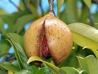 Полезные свойства мускатного ореха, его вред