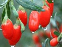 Полезные свойства ягод годжи, их вред