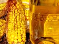 Кукурузное масло для похудения