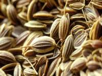 Полезные свойства семян тмина