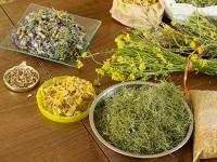 Травы, снижающие аппетит