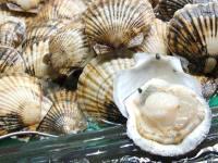 Морской гребешок — польза и вред