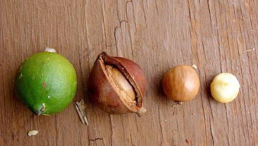 Как выбирать и хранить орехи макадамия
