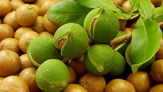 Вред ореха макадамия