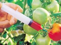 Скачать Генномодифицированные продукты реферат Охлаждение тщательная процедура обработки или использование химических веществ иногда Генномодифицированные продукты реферат скачать созревание защищает