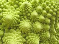 Полезные свойства капусты романеско